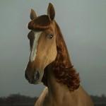 Champú de caballo