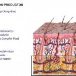 En que zona actuan los productos capilares