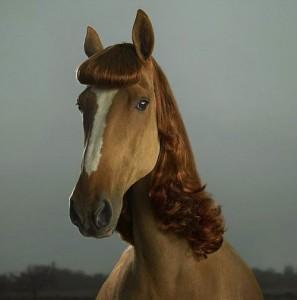 champu de caballo
